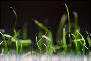 24-04-09-ca-pousse-6061